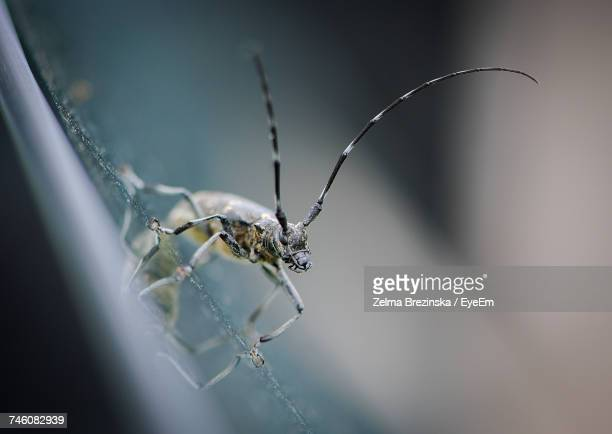 close-up of insect on glass - brezinska stock pictures, royalty-free photos & images