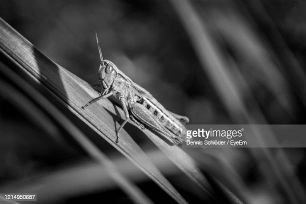 close-up of insect on gras - gras stock pictures, royalty-free photos & images