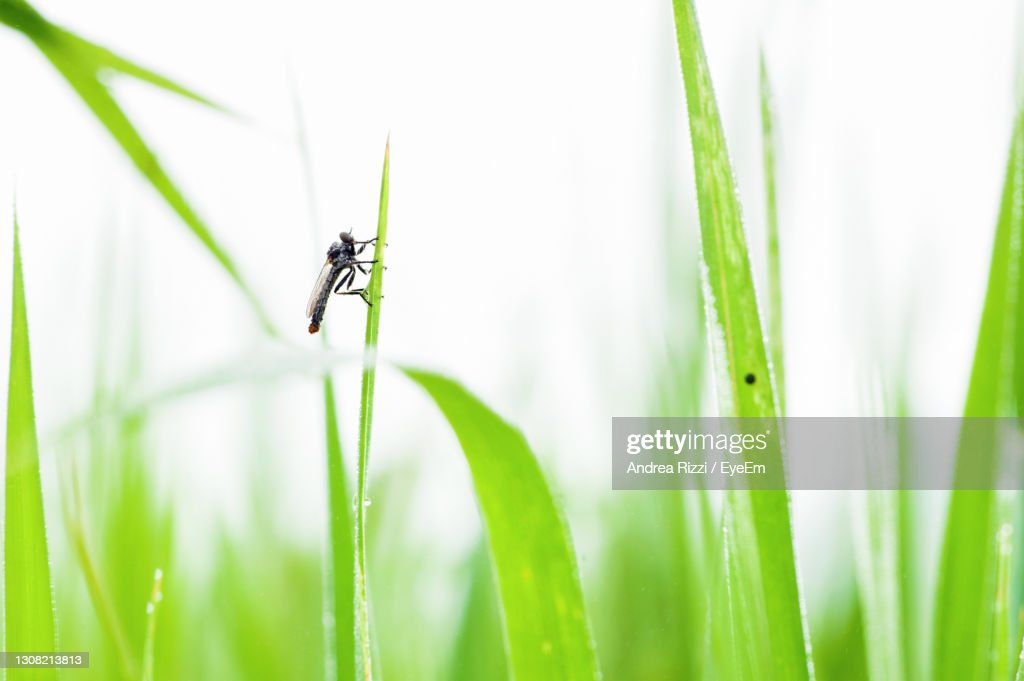 Close-Up Of Insect On Grass : Stock Photo