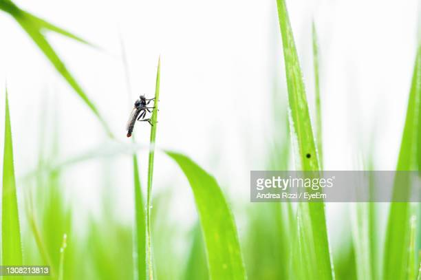 close-up of insect on grass - andrea rizzi stock-fotos und bilder