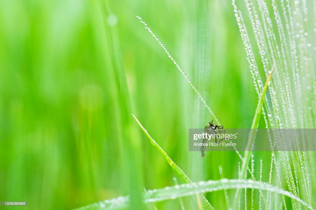 Close-Up Of Insect On Grass : Foto stock