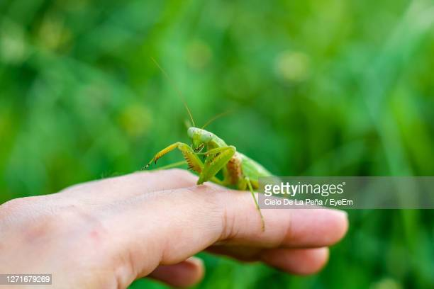 close-up of insect on hand - cielo stock pictures, royalty-free photos & images