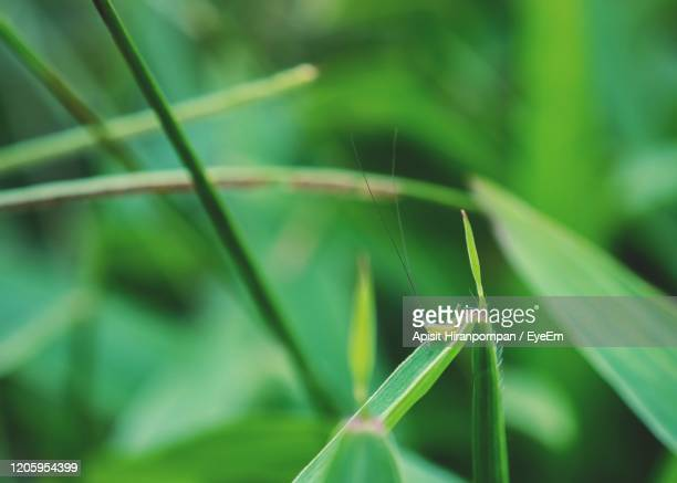 close-up of insect on leaf - apisit hiranpornpan stock pictures, royalty-free photos & images