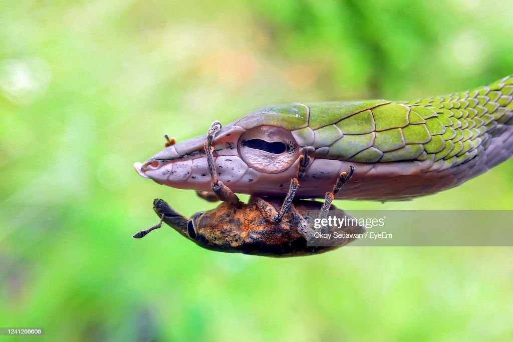 Close-Up Of Insect On Leaf : Stock Photo
