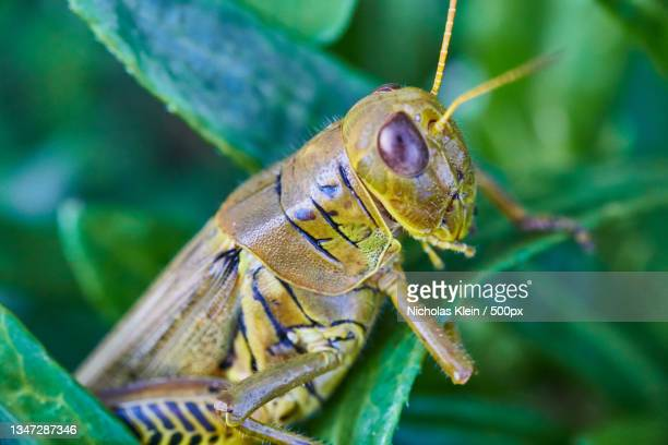close-up of insect on leaf - klein stock pictures, royalty-free photos & images
