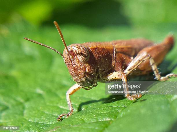 close-up of insect on leaf - locust stock pictures, royalty-free photos & images
