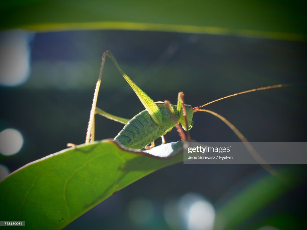 Close-Up Of Insect On Leaf : Photo