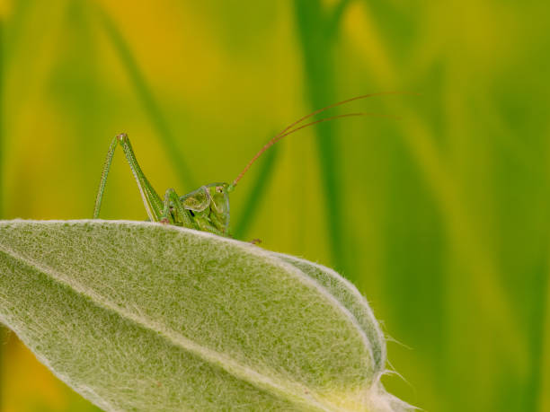 Close-up of insect on leaf,Francoforte,Germany