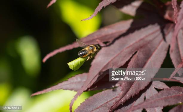 close-up of insect on leaf,newcastle upon tyne,united kingdom,uk - newcastle united pictures stock pictures, royalty-free photos & images
