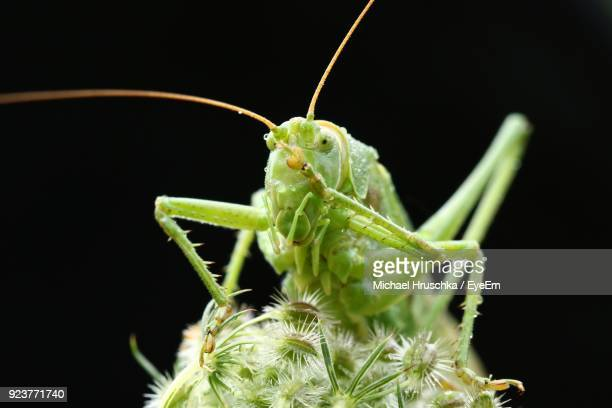 close-up of insect on plant at night - michael hruschka stock pictures, royalty-free photos & images
