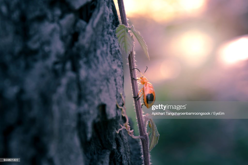 Close-Up Of Insect On Plant By Tree Trunk During Sunset : Stock Photo