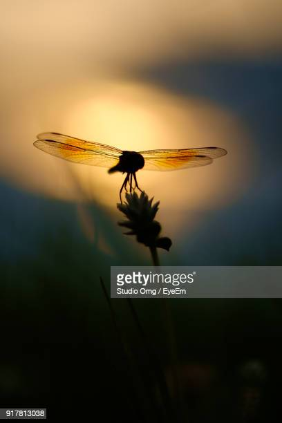 Close-Up Of Insect On Plant During Sunset