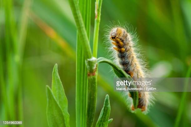 close-up of insect on plant - caterpillar stock pictures, royalty-free photos & images