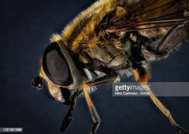 close-up of insect on plant - mike caithness stock pictures, royalty-free photos & images
