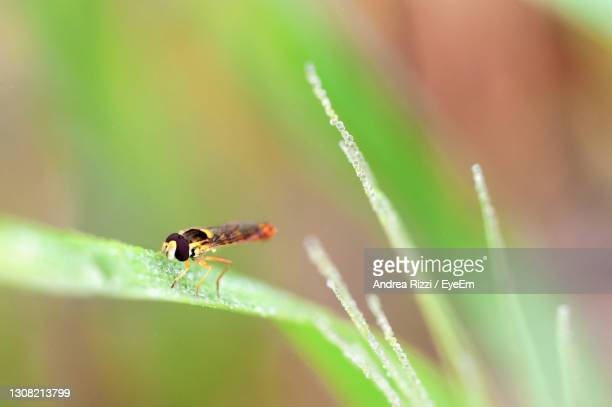 close-up of insect on plant - andrea rizzi foto e immagini stock