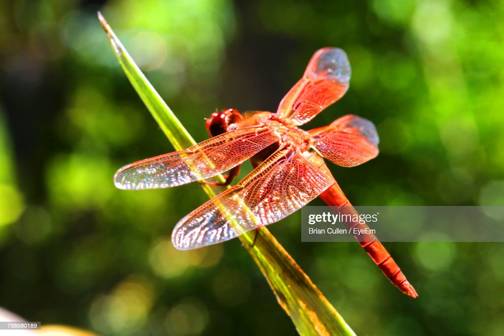 Close-Up Of Insect On Plant : Stock Photo