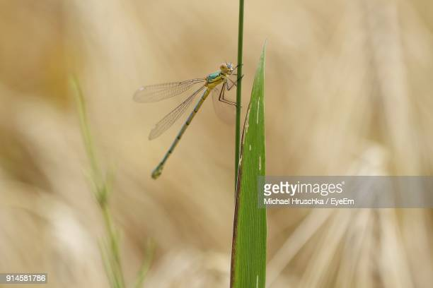 close-up of insect on plant - michael hruschka stock pictures, royalty-free photos & images