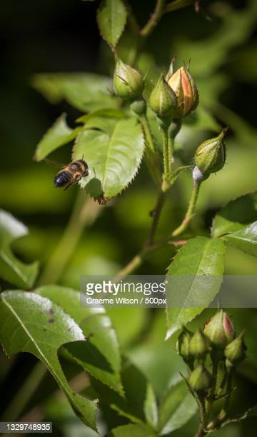 close-up of insect on plant,newcastle upon tyne,united kingdom,uk - newcastle united pictures stock pictures, royalty-free photos & images