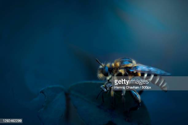 close-up of insect on plant,pusad,maharashtra,india - images stock pictures, royalty-free photos & images