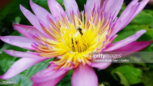 close-up of insect on purple flower - musik stock pictures, royalty-free photos & images