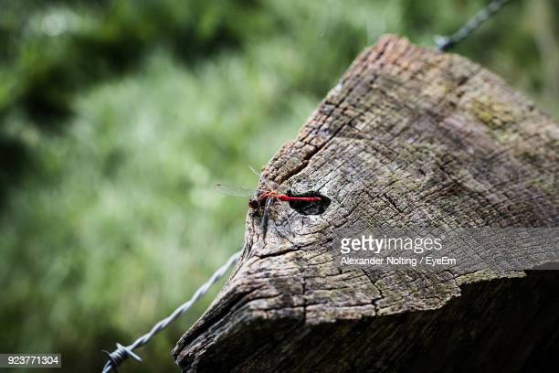 Close-Up Of Insect On Tree Stump