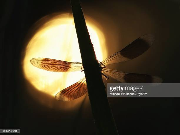 close-up of insect on twig during sunrise - michael hruschka stock-fotos und bilder