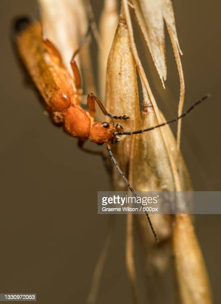 close-up of insect on twig,newcastle upon tyne,united kingdom,uk - newcastle united pictures stock pictures, royalty-free photos & images