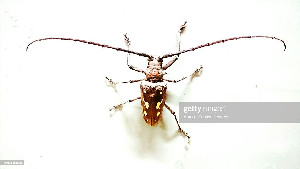 Close-Up Of Insect On Wall : Stock Photo