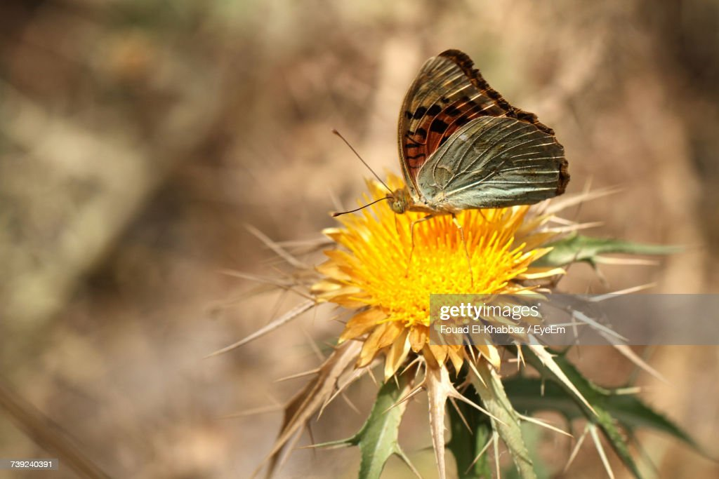 Close-Up Of Insect On Yellow Flower : Stock Photo