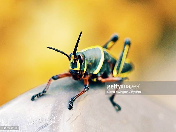 close-up of insect - {{relatedsearchurl('london eye')}} stock photos and pictures