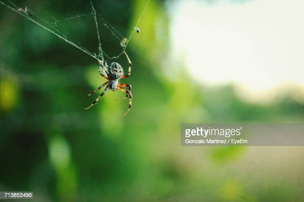 close-up of insect - spider silk stock photos and pictures