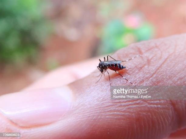 close-up of insect - malaria parasite stock pictures, royalty-free photos & images