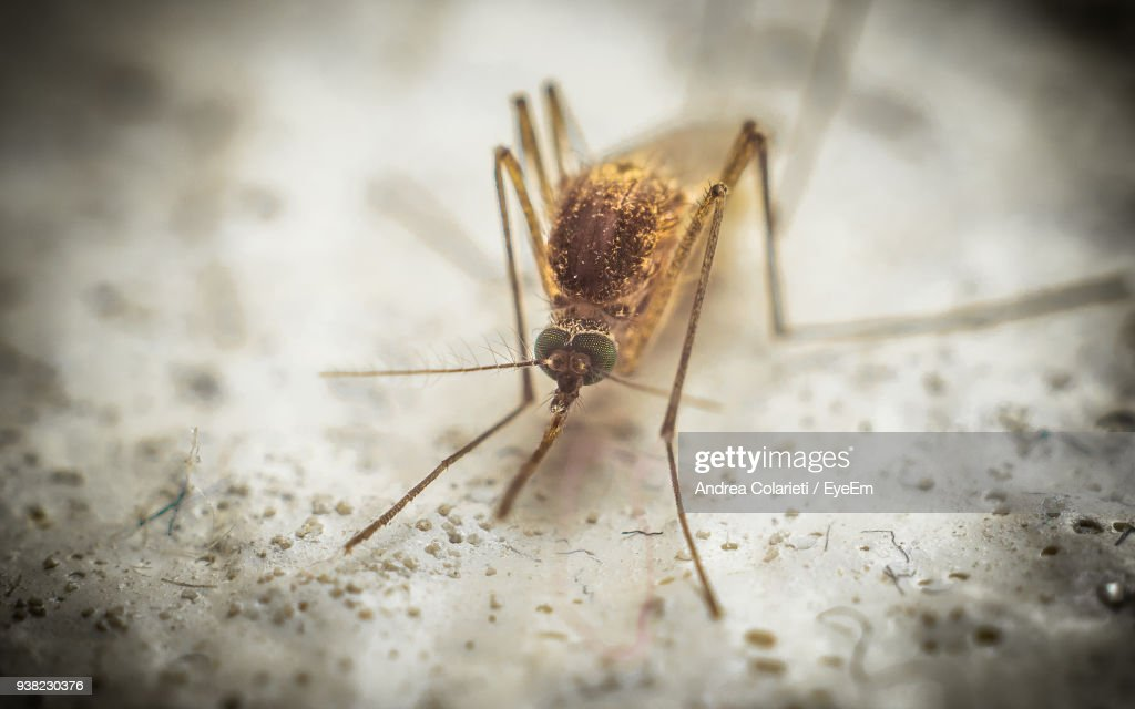 Close-Up Of Insect : Stock Photo