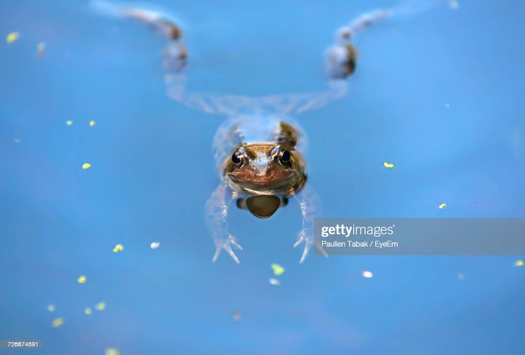 Close-Up Of Insect Swimming In Blue Water : Stockfoto