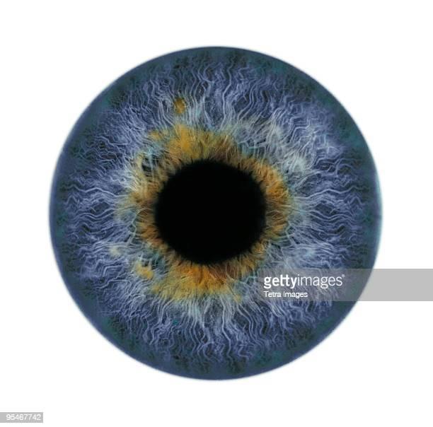close-up of iris and pupil - iris ojo fotografías e imágenes de stock