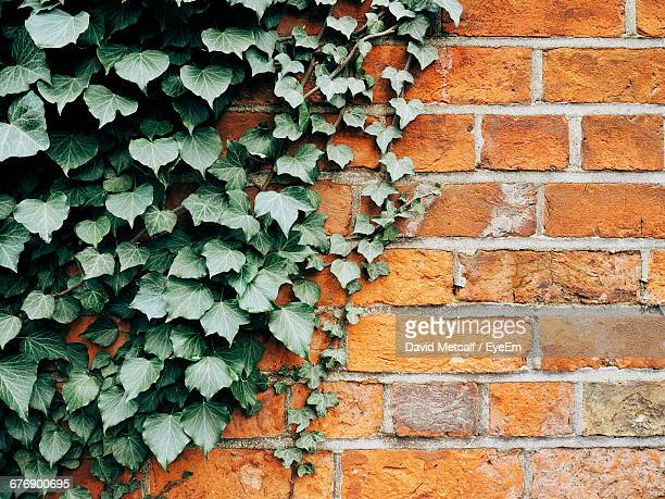 Close-Up Of Ivy Growing On Brick Wall