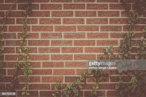 Close-Up Of Ivy Plants On Brick Wall