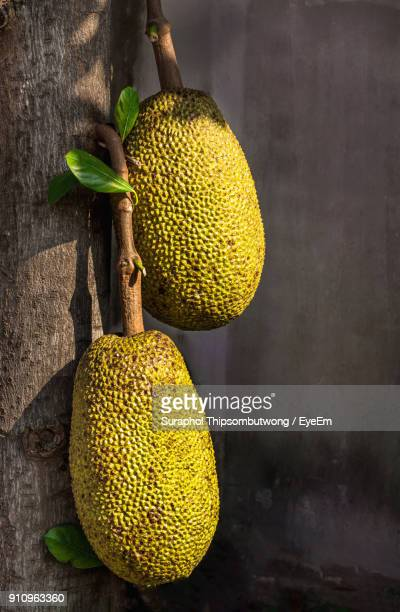 close-up of jackfruits on tree against wall - jackfruit stock photos and pictures
