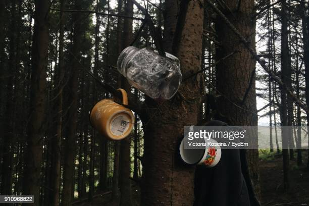 Close-Up Of Jar And Mugs Hanging On Tree Trunk In Forest