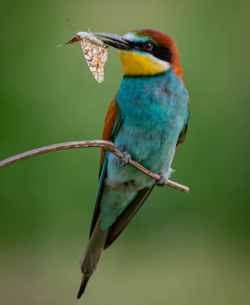 Close-up of kingfisher perching on branch