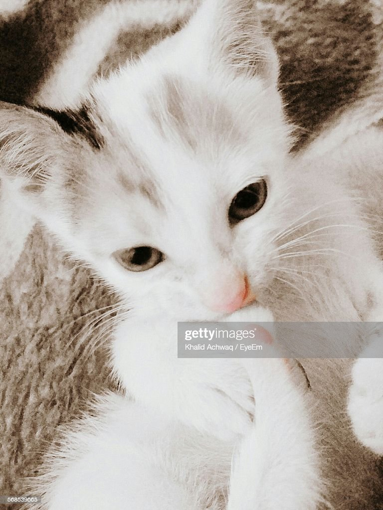 Close-Up Of Kitten At Home : Stock Photo