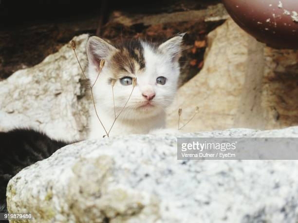 Close-Up Of Kitten By Rock