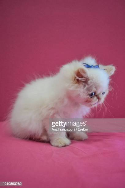 Close-Up Of Kitten On Bed Against Pink Background