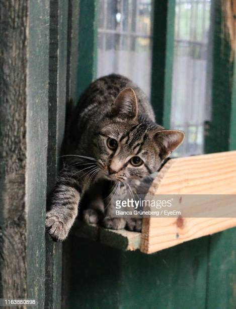 close-up of kitten on wood - domestic animals stock pictures, royalty-free photos & images