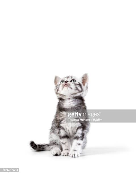 Close-Up Of Kitten Sitting Against White Background