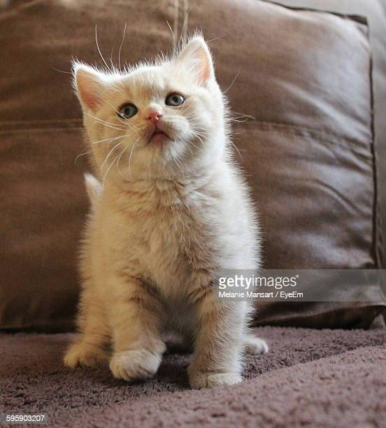 Close-Up Of Kitten Sitting On Bed
