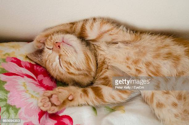 Close-Up Of Kitten Sleeping On Bed At Home