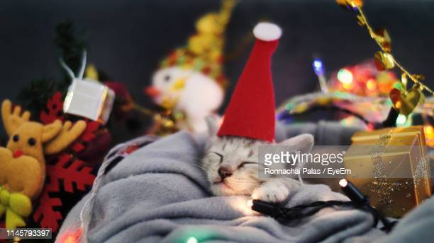 close-up of kitten wearing santa hat in basket amidst christmas decorations - christmas kittens stock pictures, royalty-free photos & images