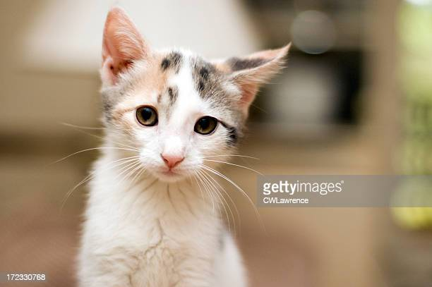 Closeup of kitten's face with blurry background