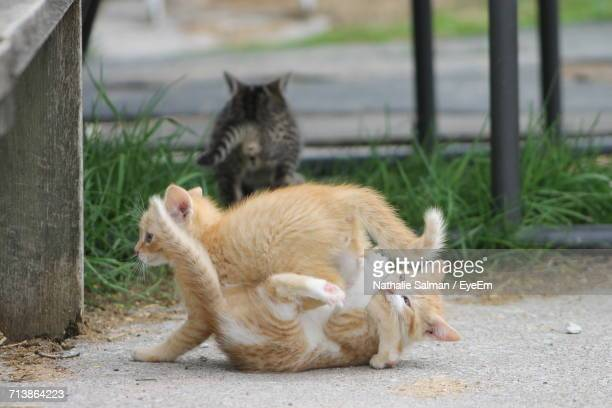 Close-Up Of Kittens Playing Outdoors
